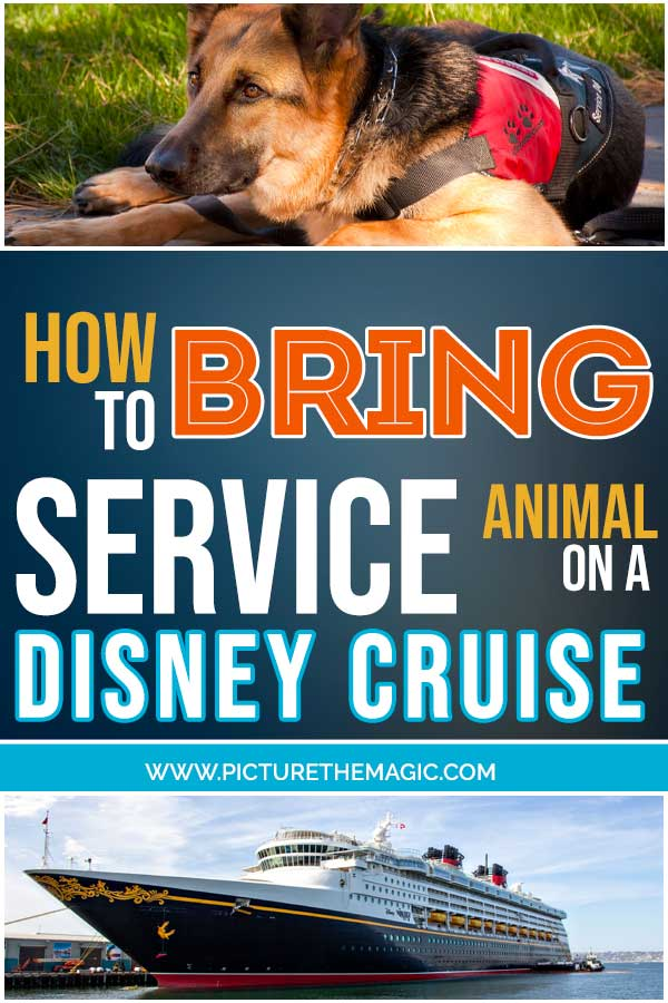 How to Bring a Service Animal on a Disney Cruise #dcl #disneycruise #service #dog #animal #serviceanimal